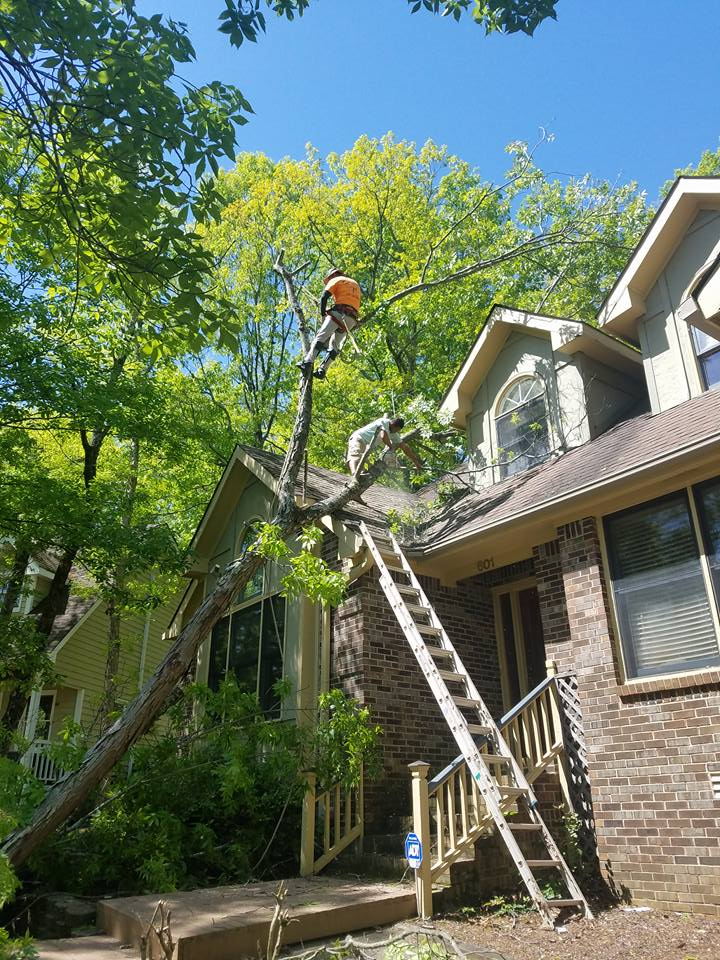 Chris' Tree Services